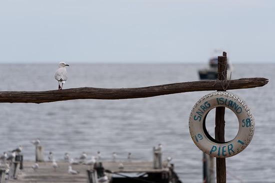 Snag Island Pier