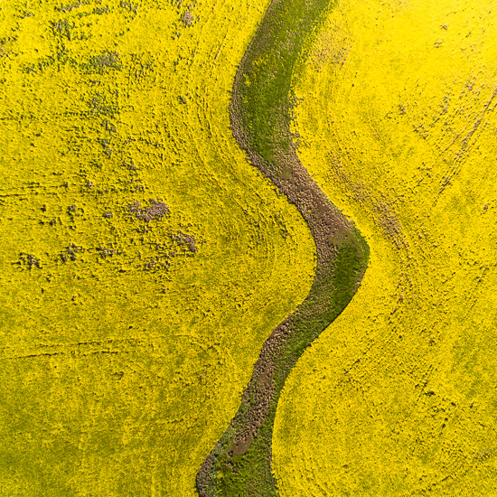 A Taste of Canola