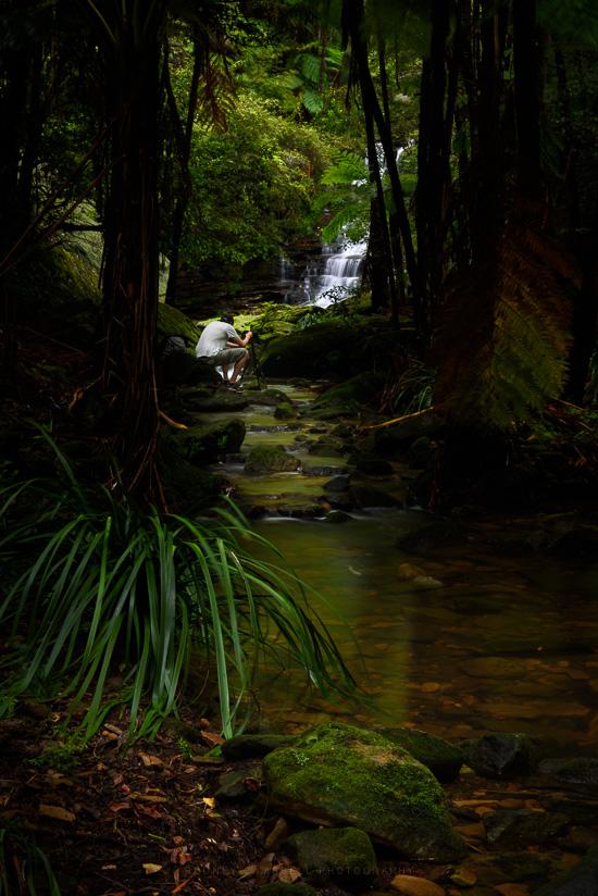 Jungle Rhythms