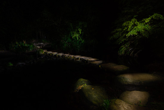 The River Path - Light Painting