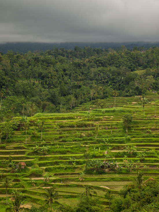 Bali: Jatiluwih Rice Terraces    - Rodney Campbell's Blog
