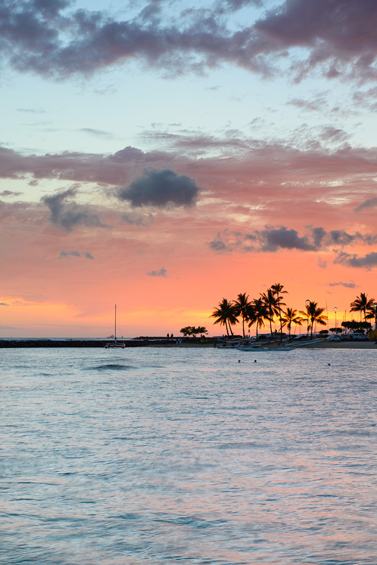 Palm Skies