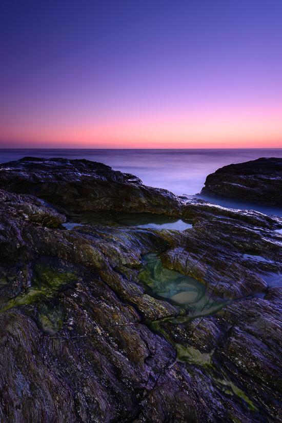 Dawns Delight