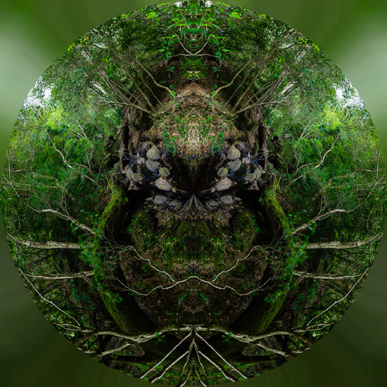 Demented Forest