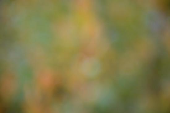 Serenica Flora