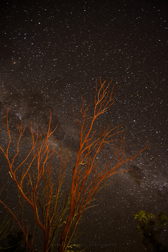 Firelight Starlight