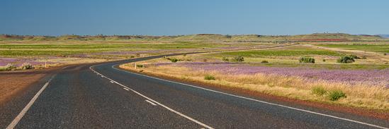 Lavender Pathways